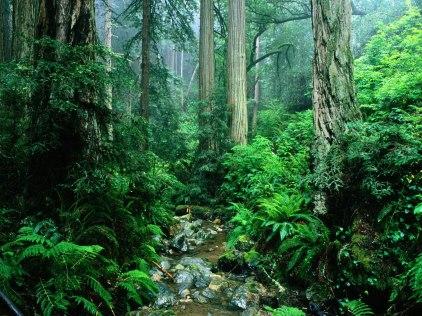 mayan-jungle-walk-green