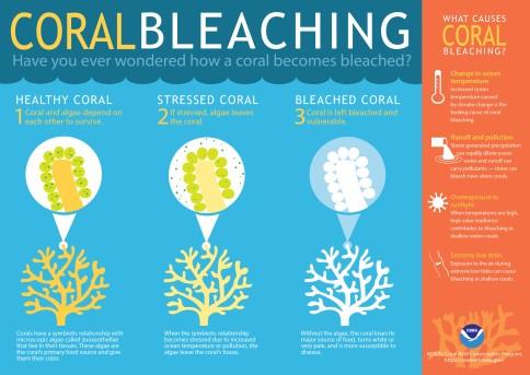 coralbleaching-large